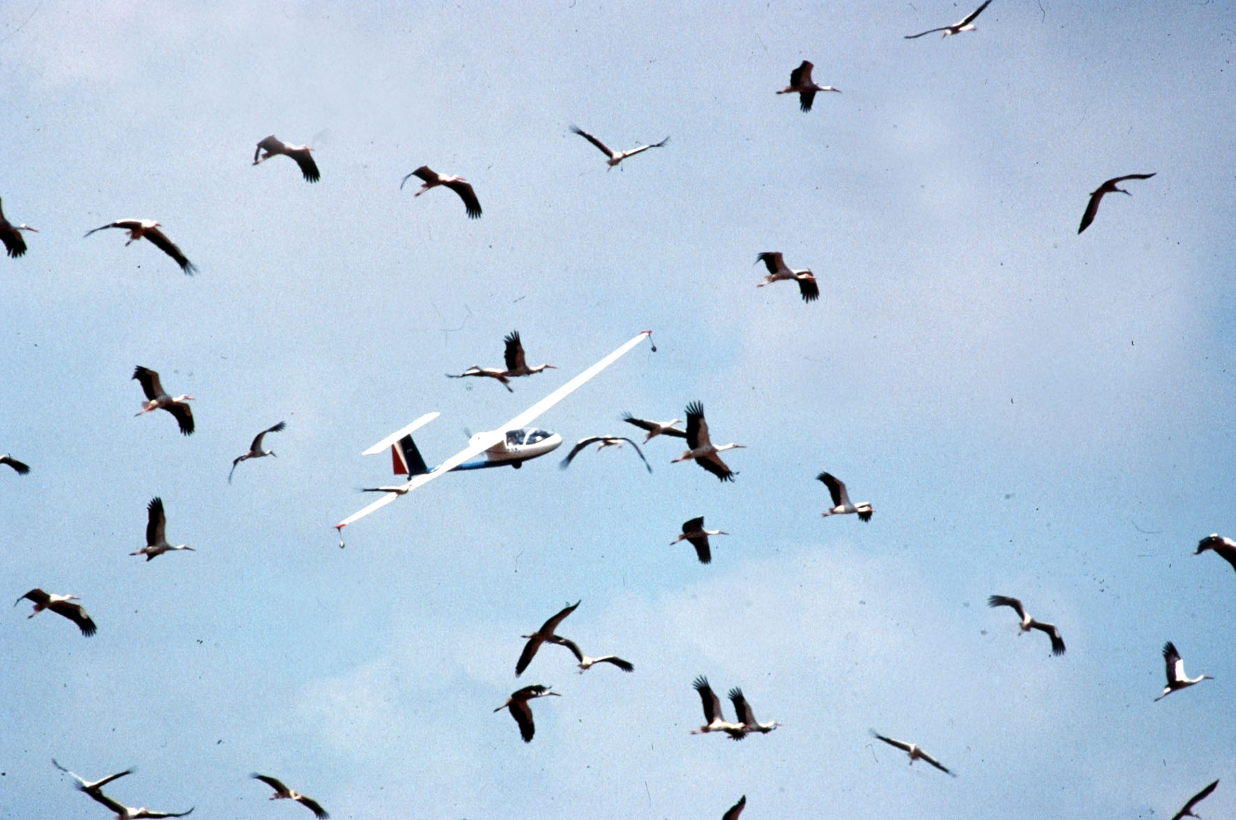 published research papers on bird populations In population-based research, the individual as well as the broader community must be considered 4:1 [published 3 january 2003cited 2006 march 8.