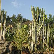 הגן הבוטני משתדרג דיגיטלית באמצעות תיעוד מתקדם של הצמחים ואפליקציה למבקרים