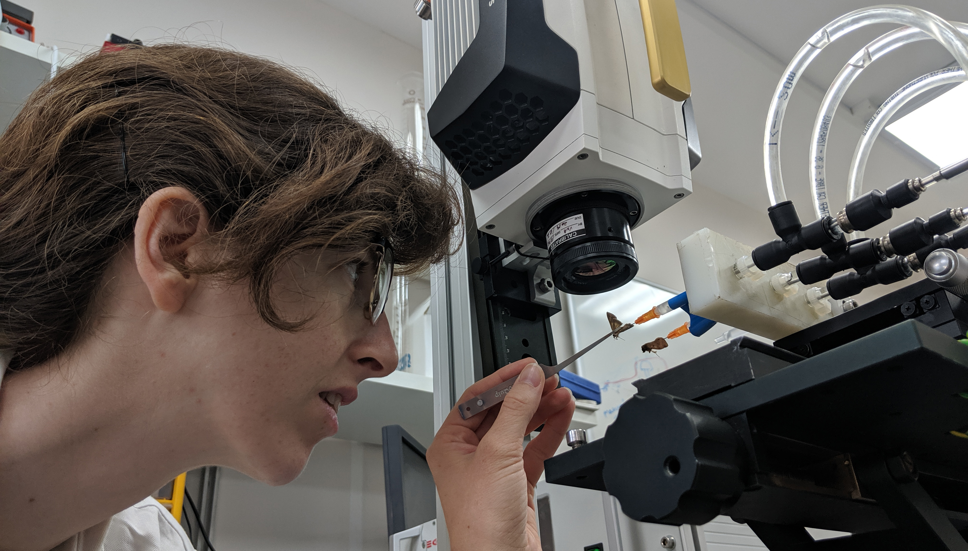 Researcher Rona Eckert of the School of Zoology, uses the unique equipment in the laboratory, as part of a study on heat conservation in the body of moths