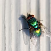 הטיפול החדשני השיב את הזבובים החולים לתפקוד נורמאלי