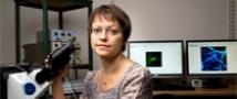 פרס בינלאומי יוקרתי בחקר מחלת האלצהיימר הוענק לפרופ' אינה סלוצקי
