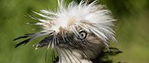 סיור באווירה פורימית בגן הזואולוגי