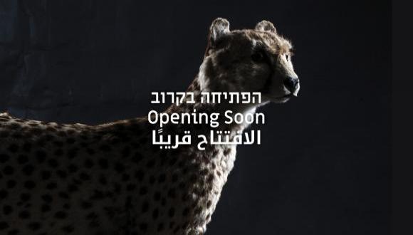 חוויה רב-חושית מרגשת בתיבת אוצרות הטבע של ישראל והסביבה