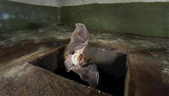 """באטמן – מאחוריך! ה""""רובוטלף"""" מסתובב חופשי באוניברסיטת תל אביב"""