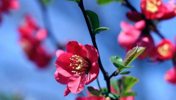 קרן שמש מאוחרת: איך צמחים יודעים שבא אביב?