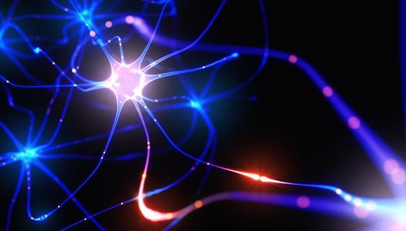 בשורה חדשה בתחום חקר המוח: מוח אנושי על שבב