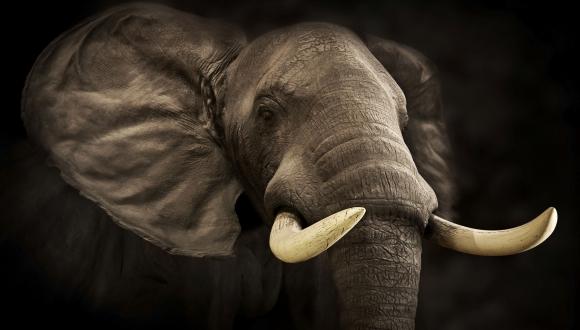על פילים ואנשים