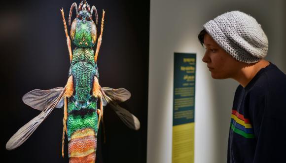 """תערוכת """"חרקים ובגדול"""" של הצלם לבון ביס, במוזיאון הטבע ע""""ש שטיינהרדט. צילום: שי בן אפרים"""