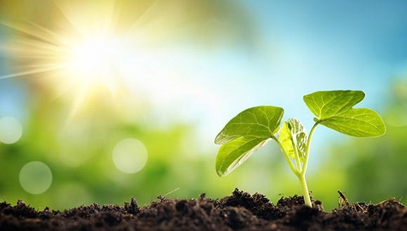 חוקרים מאוניברסיטת תל אביב הצליחו לבודד גן שהפעיל מנגנון רבייה אל-מינית בצמחים