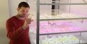 חוקרים באוניברסיטת תל אביב מצאו דרך להגביר פי 5 את תפוקת המימן מאצות חד תאיות עבור רכבי העתיד