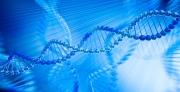 חוקרים מאוניברסיטת תל אביב חשפו חוקים שמכתיבים הורשה אפיגנטית שלא דרך ה-DNA