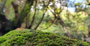 האבולוציה הגנטית המפתיעה של הצמחים הקדומים