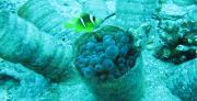 מאכזיב ועד אילת: זיהומי פלסטיק נמצאו בבעלי חיים ימיים לכל אורך חופי ישראל