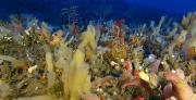 בעקבות היעלמותם של ספוגי הים מחופי ישראל