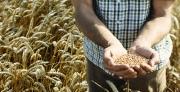 מחקר באוניברסיטת תל אביב חושף פוטנציאל לביות מודרני של צמחי מאכל