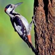 מיזם חדש מאפשר להכיר את מגוון הציפורים בקמפוס