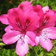 איך צמחים יודעים שבא אביב?