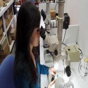 ארגז הכלים של האדם הפרהיסטורי