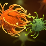 כיצד מבחינים חיידקים 'בין אויב לאוהב'?