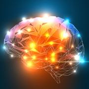 מוח נשי מוח גברי