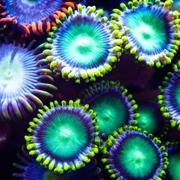 כימיקל קוסמטי מסכן את שוניות האלמוגים