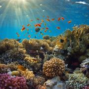 מה מוציא את האלמוגים מסינכרון?
