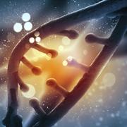 ארגון תלת ממדי של גנומים וגנים