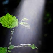 מהצמחים באהבה