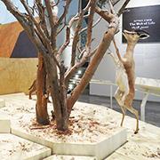 עץ החיים של מוזיאון הטבע